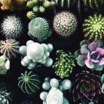 bloementrend cactus
