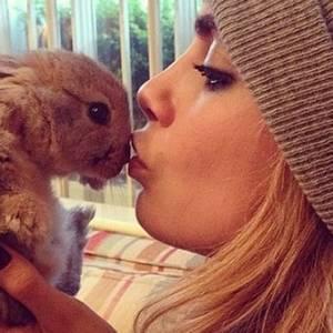 cecil instagram-dieren