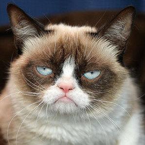 grumpy cat instagram-dieren