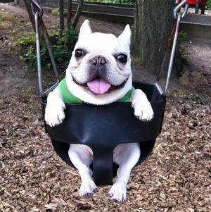 sir barkley instagram-dieren